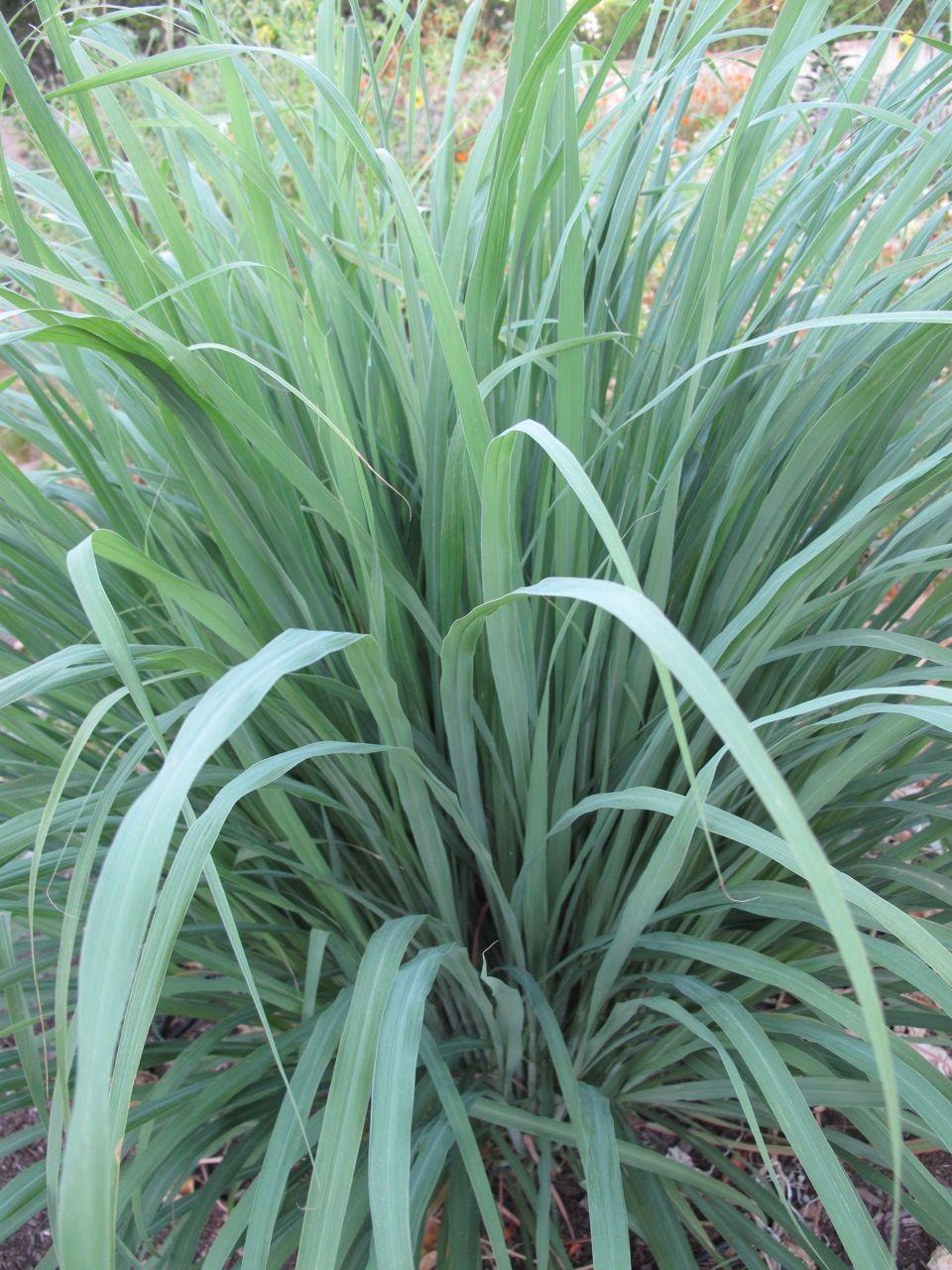 Florida Porch Plants