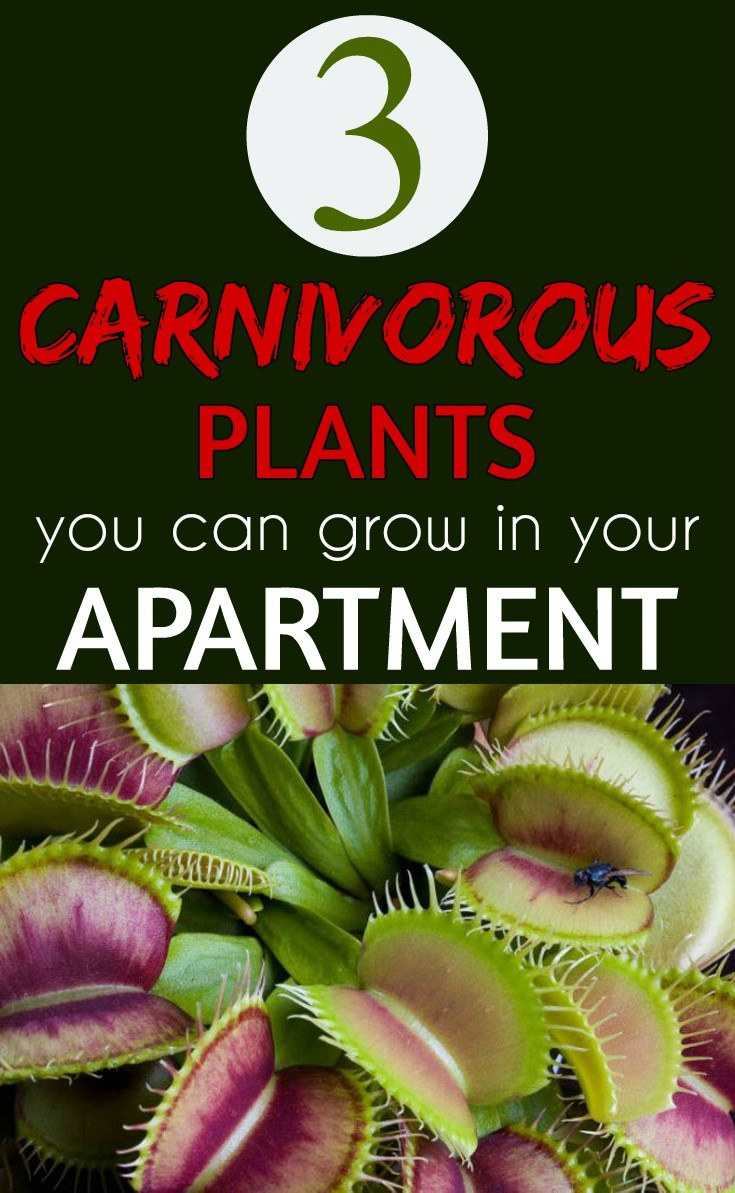 3 Carnivorous Plants You Can Grow In Your Apartment