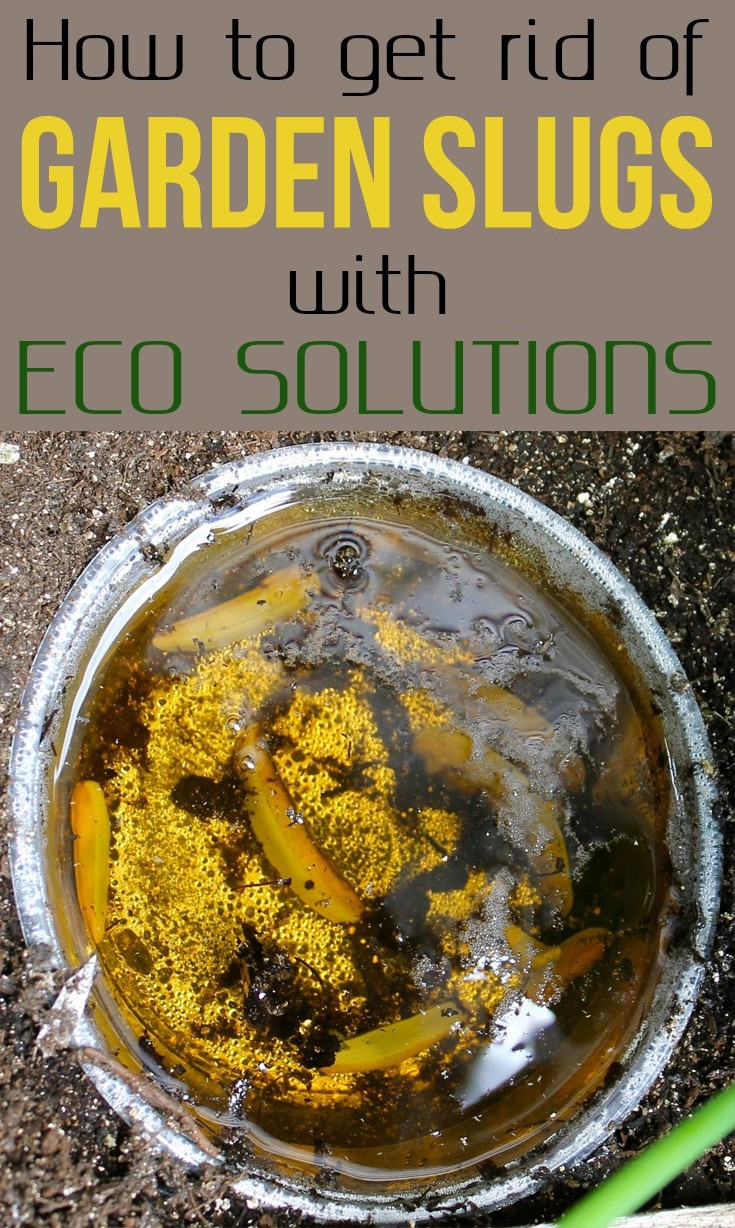 How to get rid of garden slugs with eco solutions for How to get rid of slugs in garden