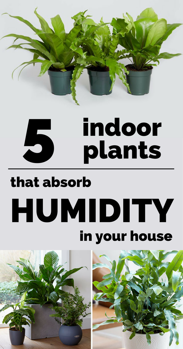 Purifying House Plants