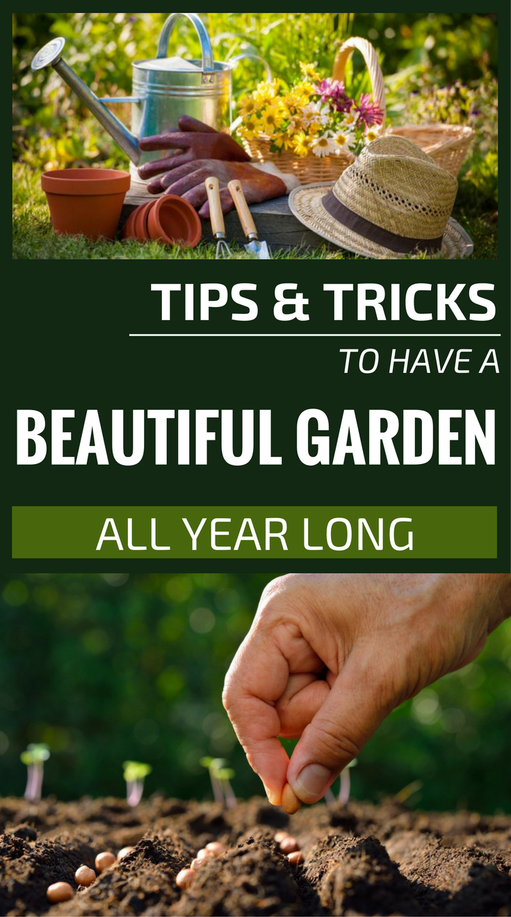 Tips and tricks to have a beautiful garden all year long - Tips for a lovely garden ...