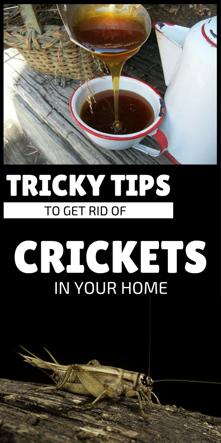 Tricky Tips To Get Rid Of Crickets In Your Home