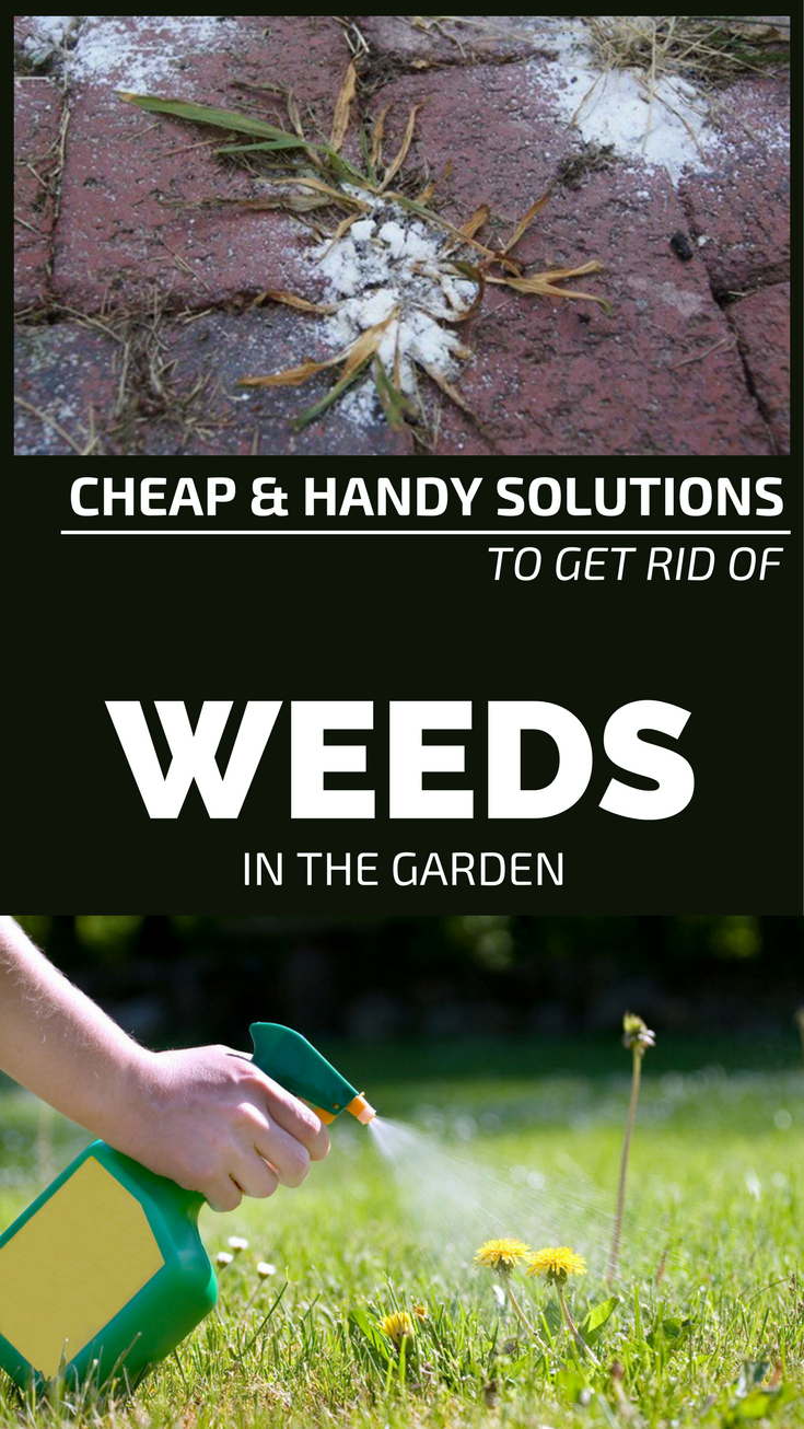 how to get rid of weeds cheap