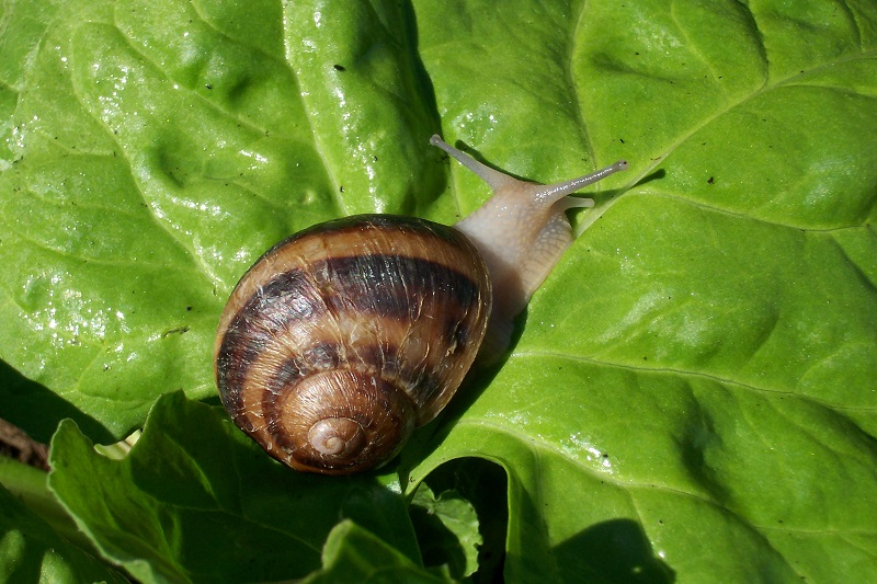 Organic Solutions To Get Rid Of Slugs And Snails In Your