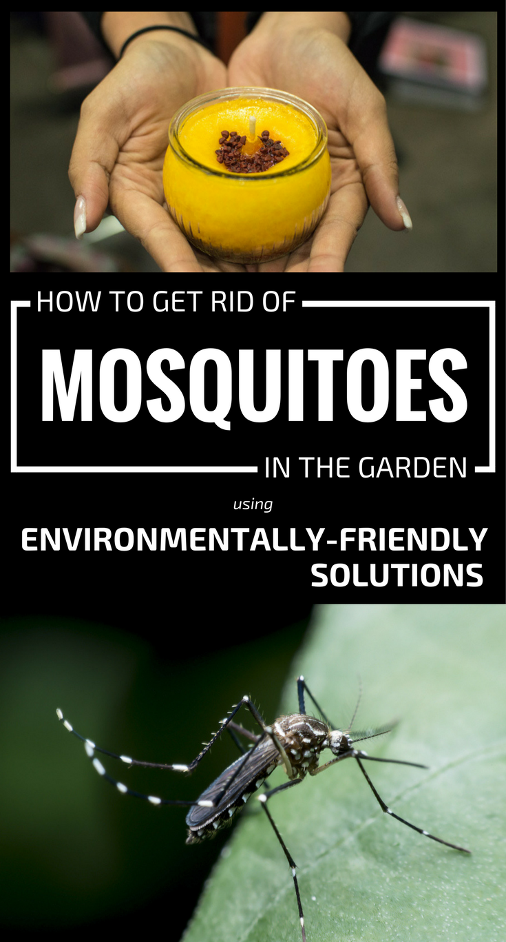 How To Get Rid Of Mosquitoes In Your Backyard 28 Images Best 25 Prevent Mosquito Bites Ideas