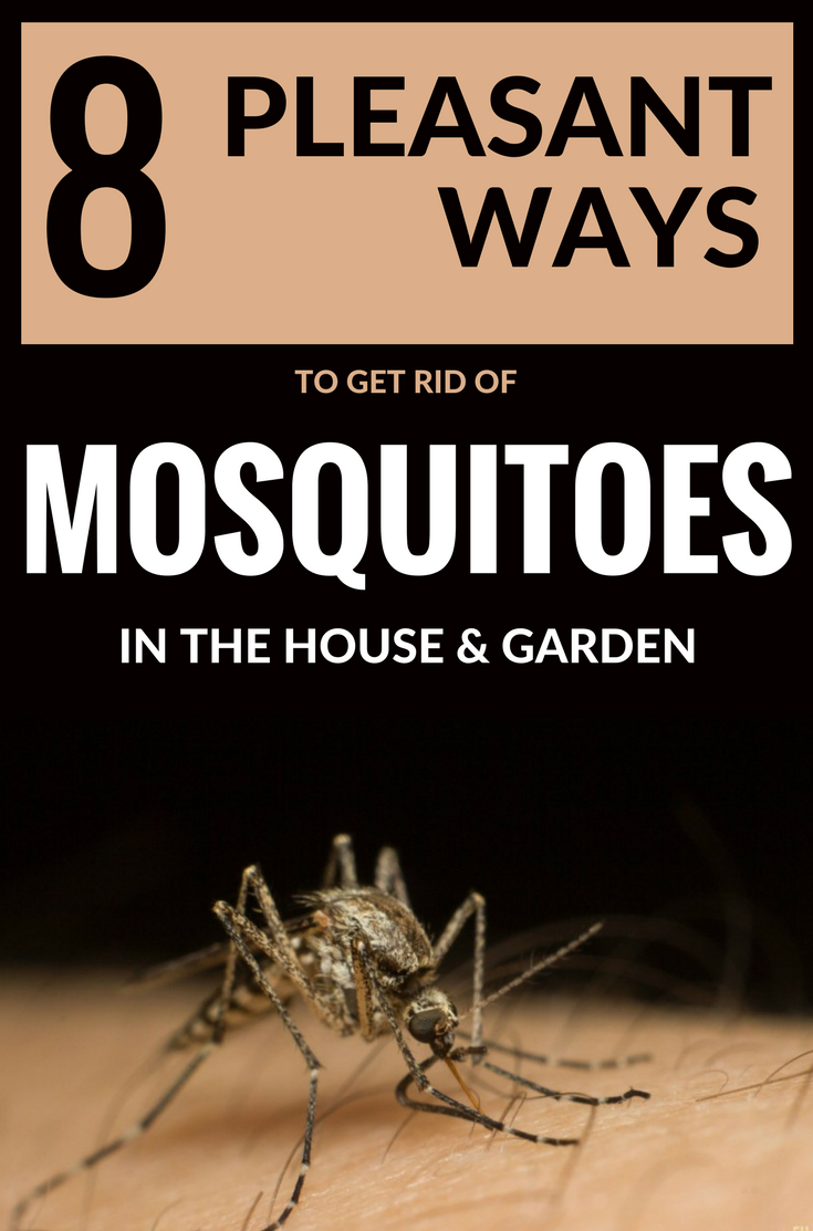 8 pleasant ways to get rid of mosquitoes in the house and Ways to get rid of mosquitoes in your house